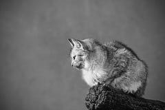 Sitzende Katze Lizenzfreie Stockbilder