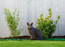 Sitzende Katze stockfotos