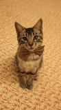 Sitzende Katze, die einen Bogen trägt Stockbilder