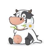 Sitzende Kuh, die Gänseblümchen isst stock abbildung