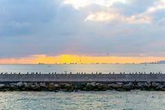 Sitzende Seevögel über der Wand stockbilder