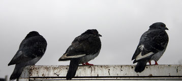 Sitzende Vögel (2) Stockbild