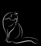 Sitzende weiße Katze Stockbild