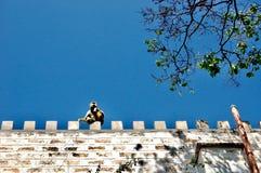Sitzender Affe Stockfotografie
