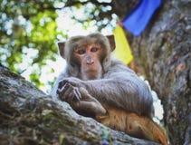 Sitzender Affe auf dem Baum, in Kathmandu Stockbild