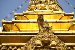 Affe auf stupa in Katmandu Lizenzfreie Stockfotografie
