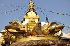 Sitzender Affe auf swayambhunath stupa in Katmandu, Nepal Stockbilder