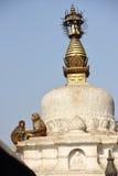 Sitzender Affe auf swayambhunath stupa in Katmandu, Nepal Stockbild