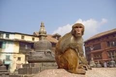 Sitzender Affe auf swayambhunath stupa in Katmandu, Nepal Lizenzfreie Stockfotografie
