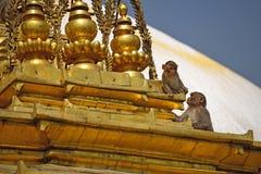 Sitzender Affe auf swayambhunath stupa in Katmandu, Nepal Stockfoto