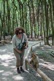 Sitzender Affe bei Affenberg (Affe-Hügel) in Salem, Deutschland Lizenzfreies Stockfoto