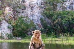 Sitzender Affe mit Gebirgshintergrund, Stein-Park Khao Ngu, Ra Lizenzfreies Stockfoto