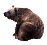 Sitzender Bär. Lokalisiert über Weiß lizenzfreie stockfotografie