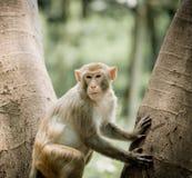 Sitzender Baum des Affen Lizenzfreie Stockfotos