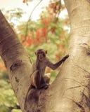 Sitzender Baum des Affen Stockfotos