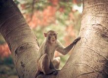 Sitzender Baum des Affen Lizenzfreie Stockfotografie