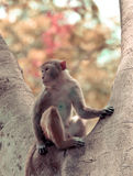 Sitzender Baum des Affen Stockbilder