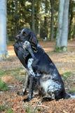 Sitzender Jagdhund mit Krähe Lizenzfreie Stockfotografie