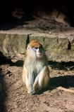Sitzender trauriger Affe im Zoo Lizenzfreies Stockbild