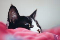 Sitzendes Gelbauge der schwarzen Katze Lizenzfreie Stockbilder