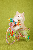 Sitzendes Innere Norweger-Forest Cat-Kätzchens verzierte Dreiradwarenkorb Stockfoto