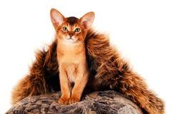 Sitzendes Kätzchenporträt Stockfotos