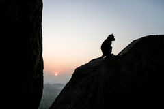 Sitzendes Schattenbild des Affen an der Dämmerung Lizenzfreie Stockfotografie
