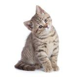 Sitzendes Schauen der jungen Katze in voller Länge mit der großen Aufmerksamkeit lokalisiert lizenzfreies stockfoto