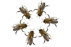 Sitzung der Bienen Stockbild