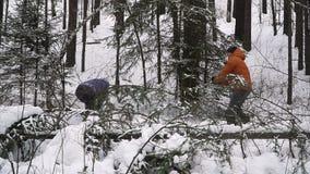 Sitzungs-Weihnachten im Wald stock video
