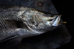 Siver ryba Obrazy Stock