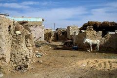 siwa оазиса Стоковые Фото