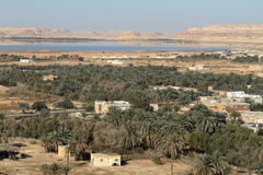 The Siwa Oasis in the Sahara of Egypt Stock Image