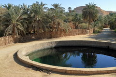 The Siwa Oasis in the Sahara Royalty Free Stock Image