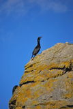 Siwash Rock. Cormorants and seagulls sit atop Siwash Rock in Vancouver stock images