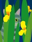 Siwieję paskował kota Obrazy Royalty Free