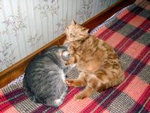 Siwieje i pomarańcze Obraz Royalty Free