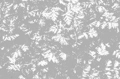 Siwieje liścia tło Obraz Royalty Free