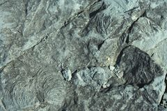 Siwieje Rockowego tło Zdjęcie Stock