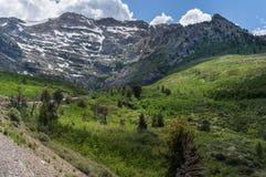 Siwieje szczyt w Wschodnim Nevada Obrazy Stock