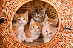 Six in a basket Royalty Free Stock Image