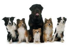 Six beautiful dogs Stock Photo