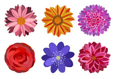 Six beautiful multi colored flowers. For ornament Royalty Free Stock Photo
