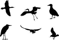 Six birds Stock Photography