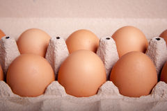 Six brown egg in a tray. Six brown egg in a row on a tray Royalty Free Stock Image