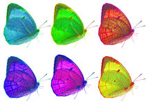 Six butterfly on isolated Royalty Free Stock Photo