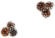 Six cônes de pin comme fond pour l'hiver Image stock