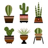 Six cactuses in pots with ornament Royalty Free Stock Image