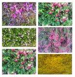 Six carpet flower textures Stock Images