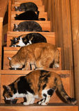 Six cats eating dinner on stairs Royalty Free Stock Photos